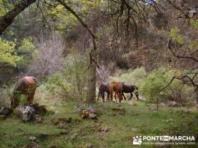 Cascadas del Purgatorio - Club de montaña en Madrid; rutas senderismo comunidad de madrid
